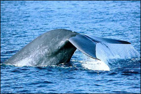 attraction_whale_watching